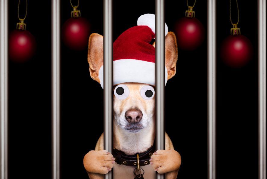 A reindeer behind bars