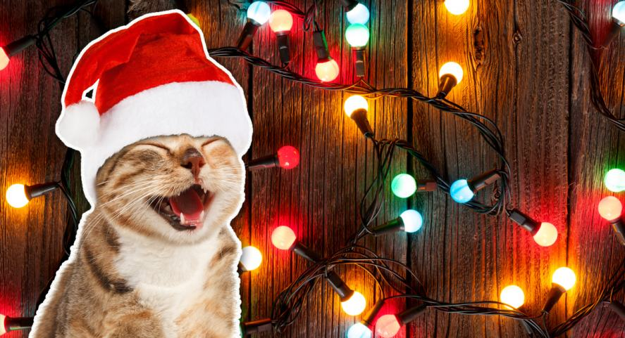 A cat laughing at some colourful Christmas tree lights