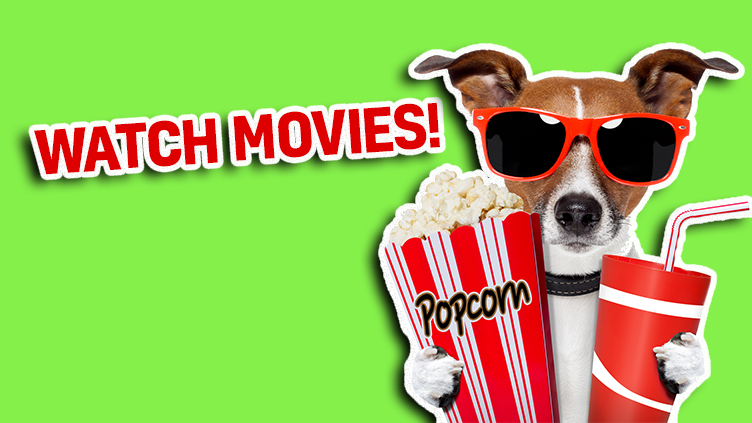 A dog with popcorn ready to watch movies