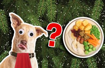 Could you survive Christmas dinner quiz