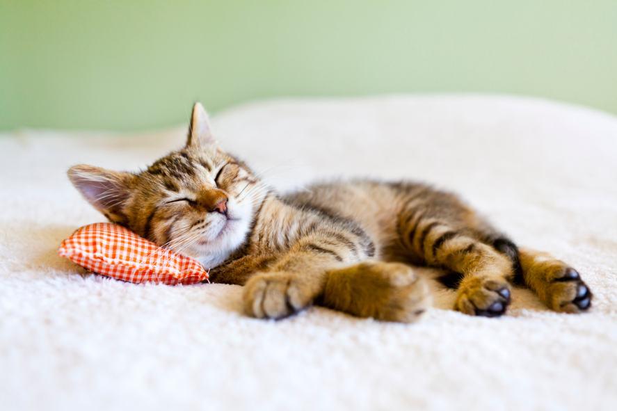 A sleepy kitten