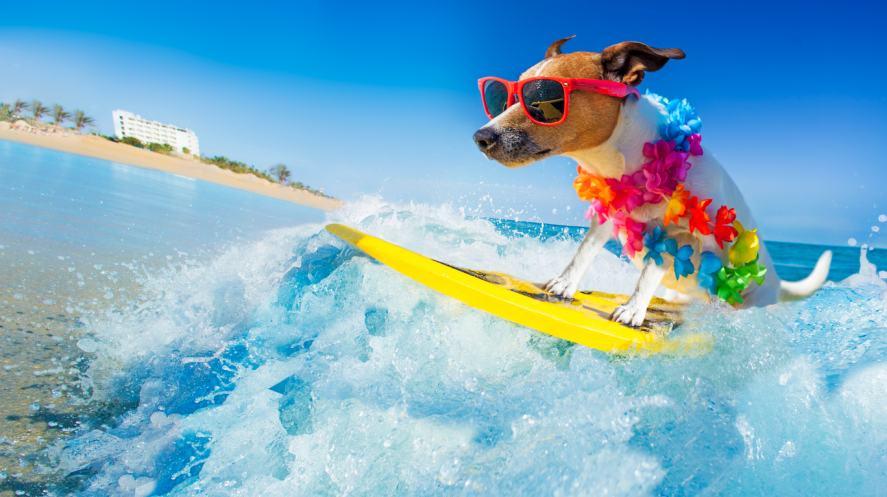 A dog on a surfboard