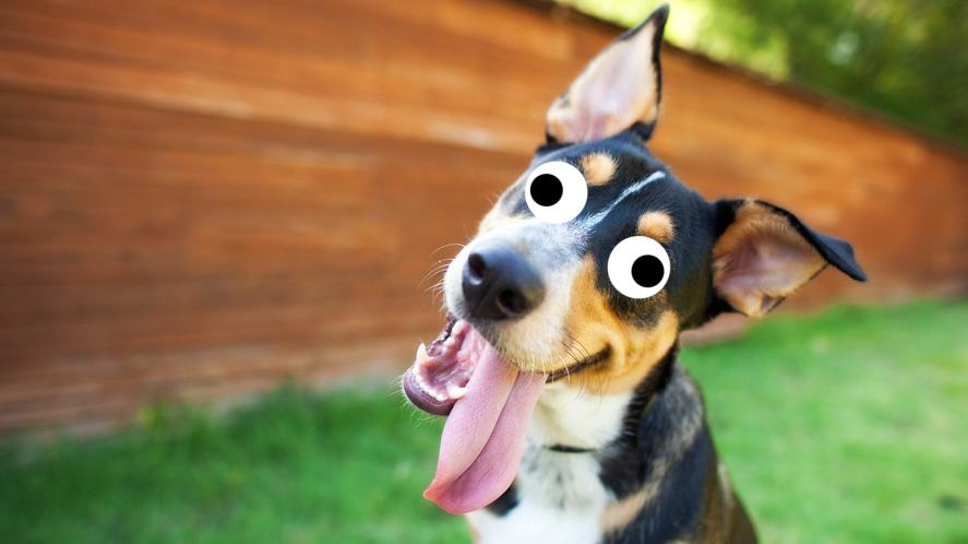 A dog tilting its head
