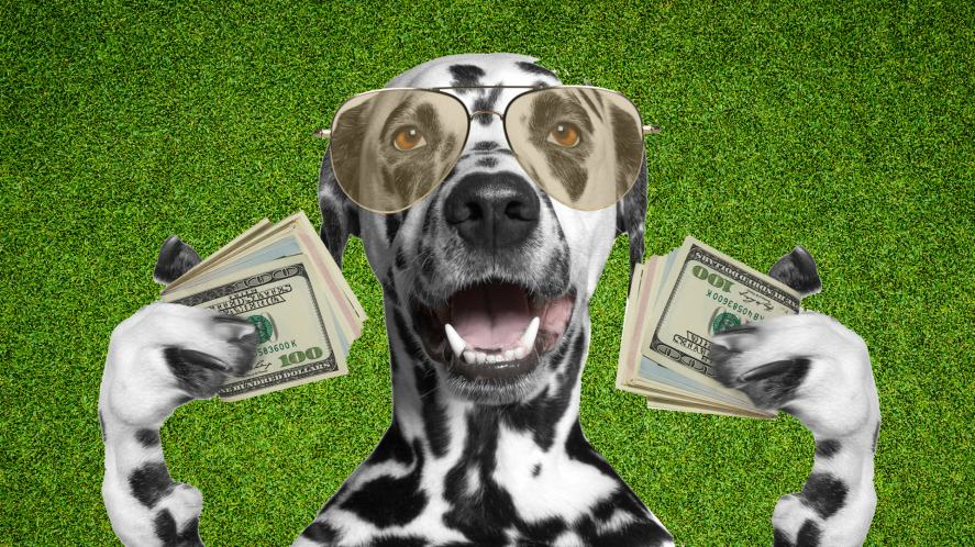 A dog holding lots of money