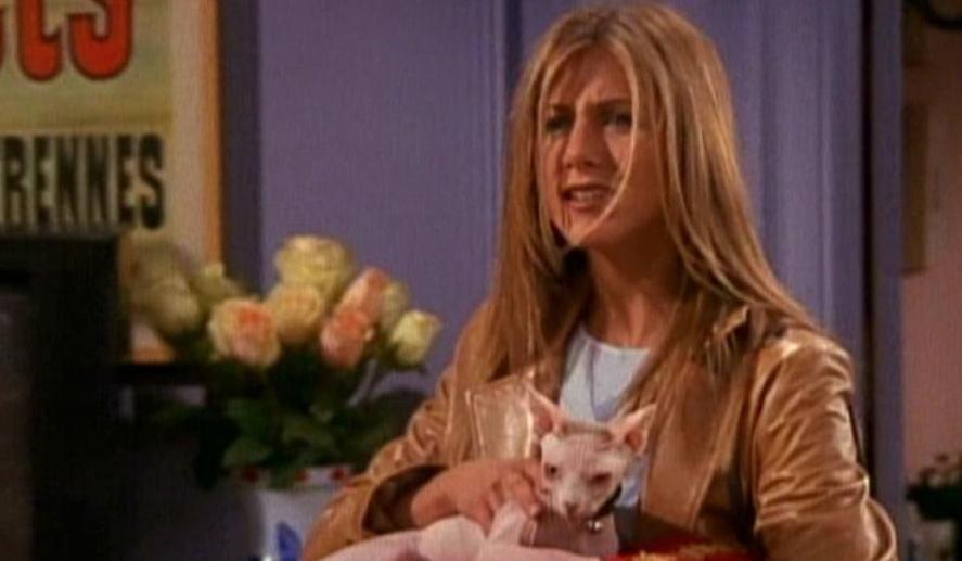 Rachel's cat