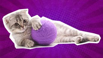 Funny cat jokes: a cat with some wool