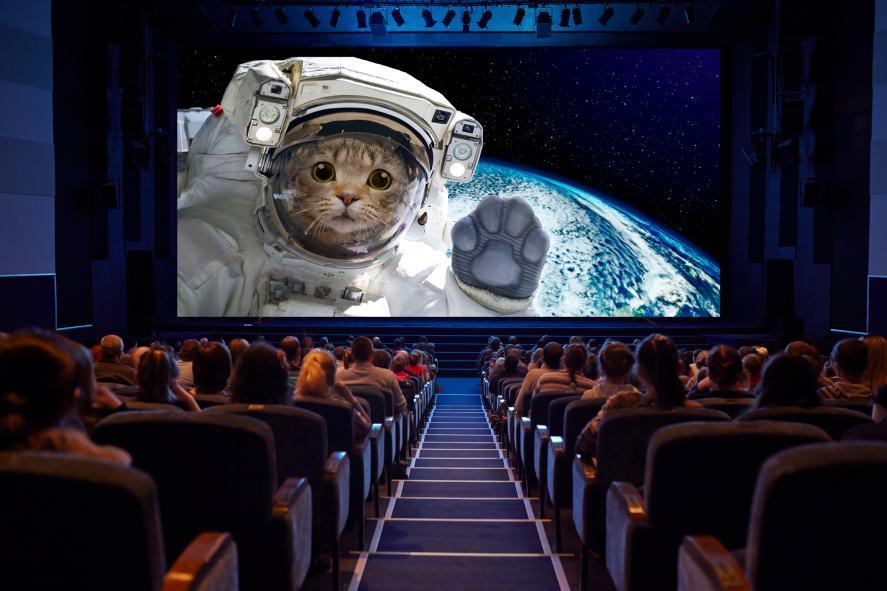 A cinema audience enjoys a sci-fi film about a cat