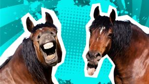 Two horses laughing at funny horse jokes