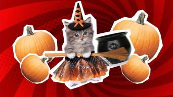 Funny witch jokes: a kitten in a witch costume with pumpkins