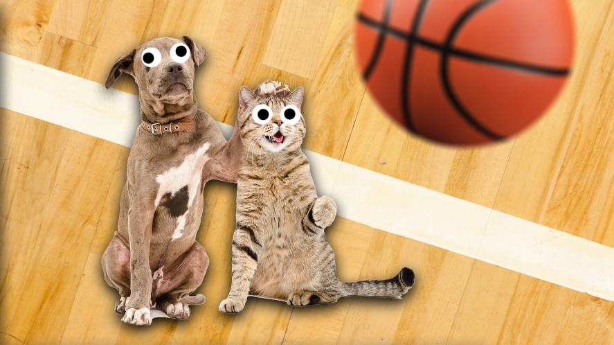 A cat and dog play basketball