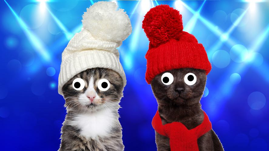 Cats in wooly hats