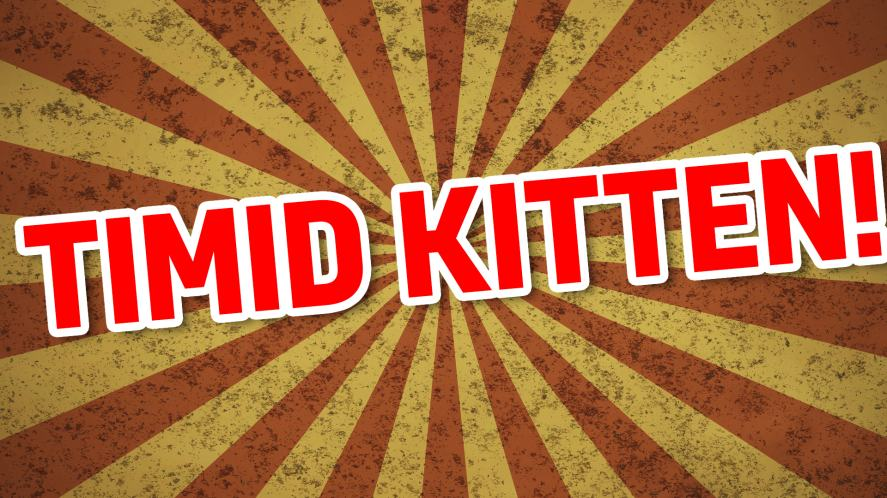 Your name is: TIMID KITTEN!