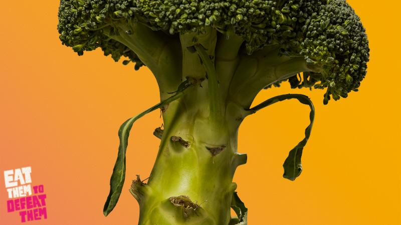 A grumpy looking broccoli