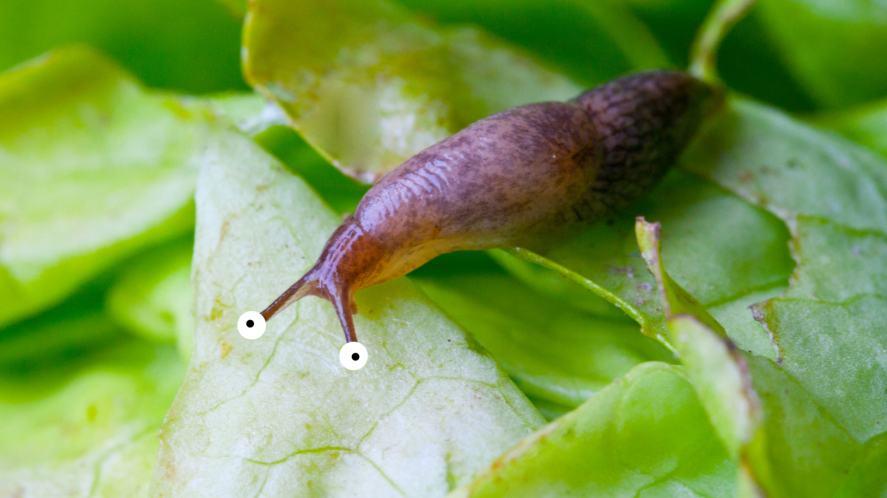 A slug on a leaf