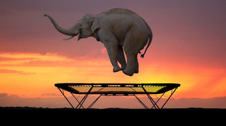 An elephant on a trampoline