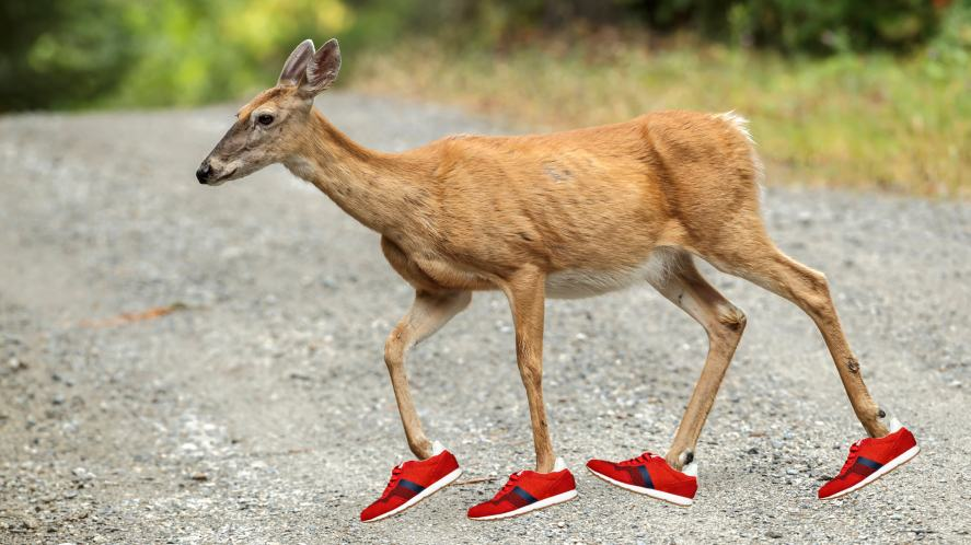 A deer wearing running shoes