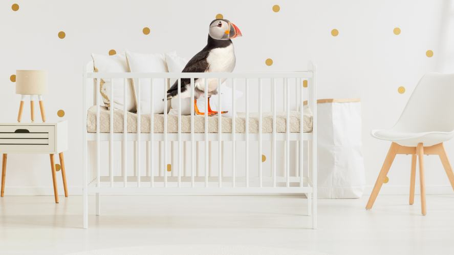 A puffin in a baby's cot