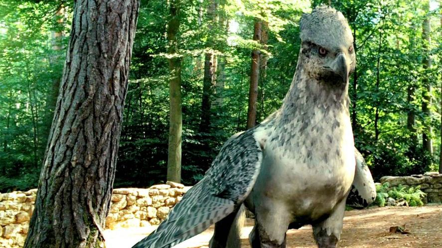 A hippogriff