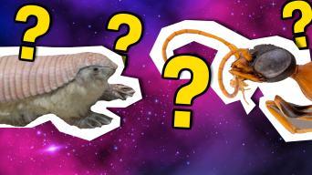Fake or real animal quiz