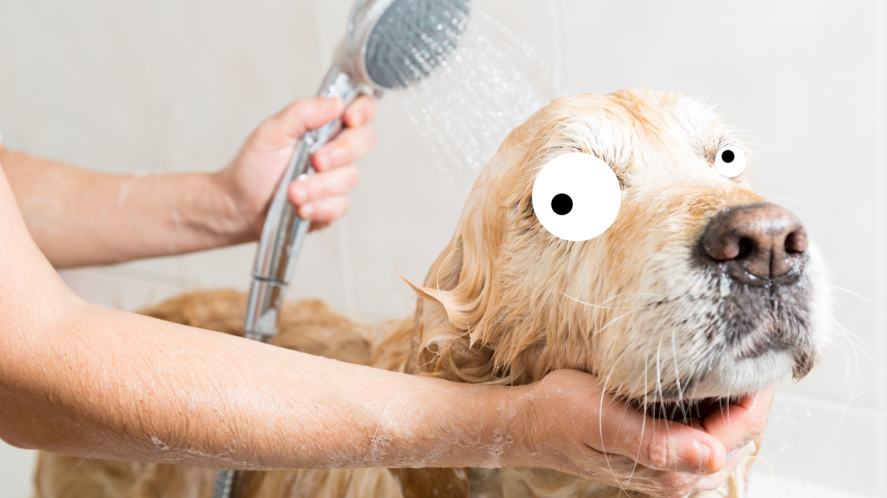 A dog in the bath