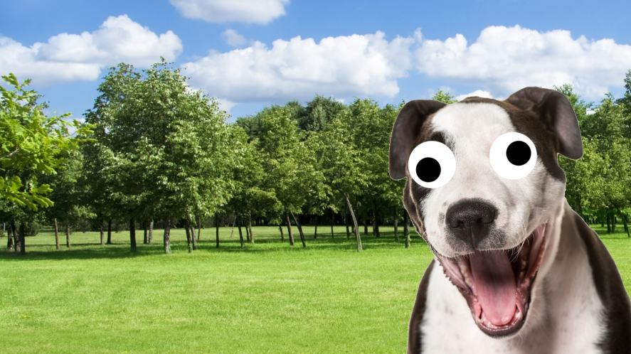 An excited dog in the park