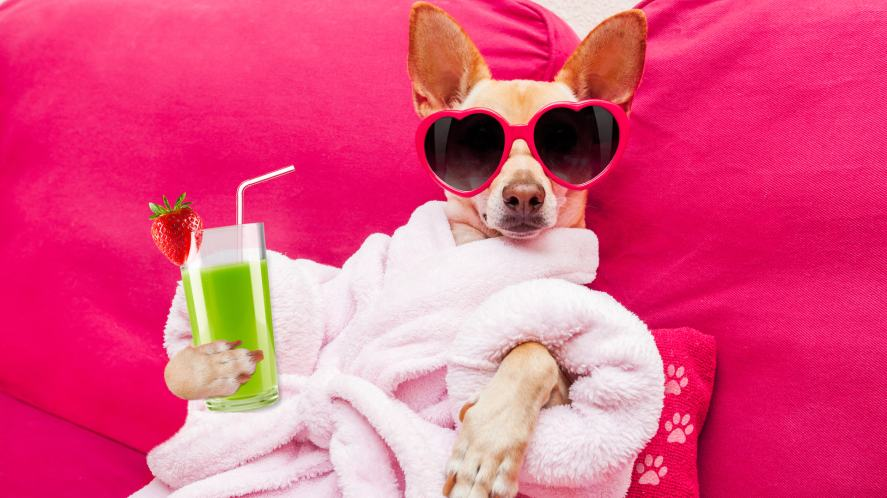 A dog in a dressing gown with a fancy smoothie