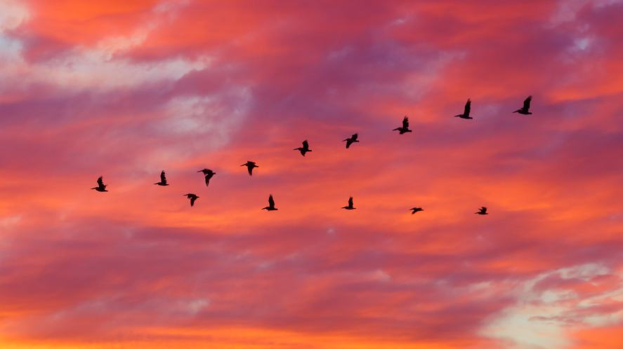 Birds flying somewhere or other | Science Quiz