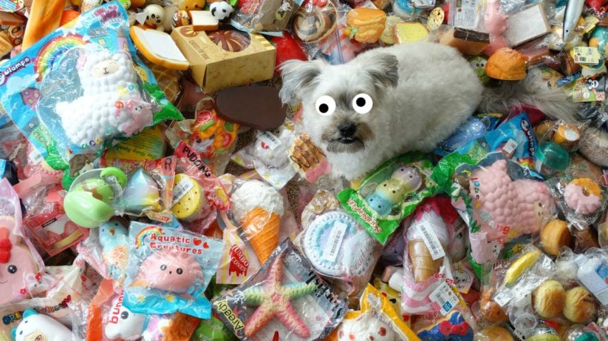 A dog surrounded by squishies