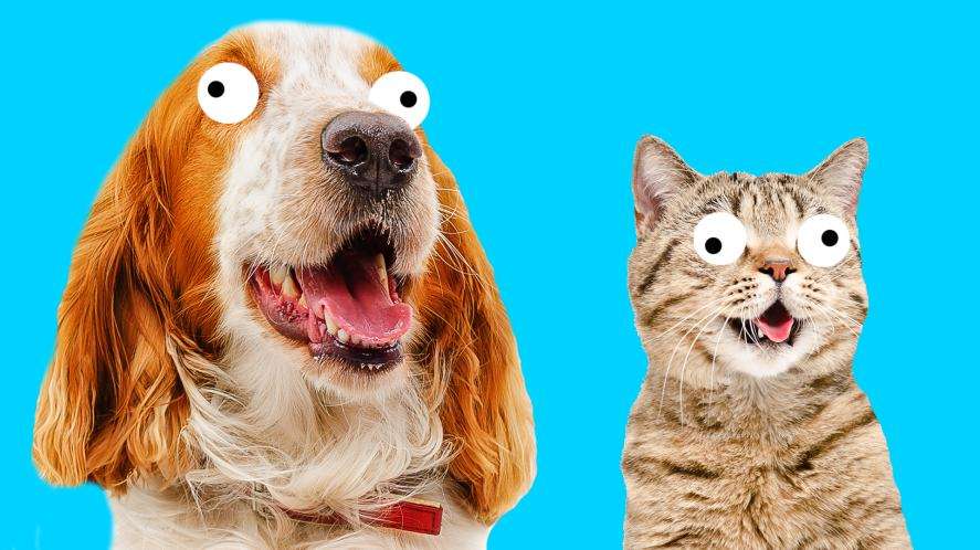A dog and cat waiting for your answer