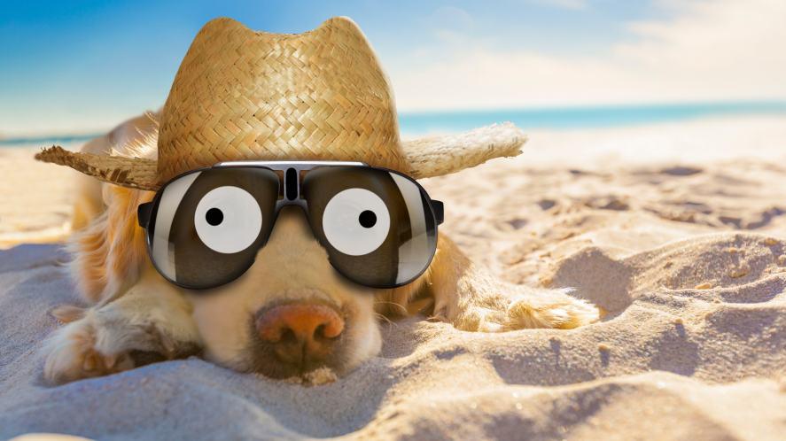 A dog wearing a hat