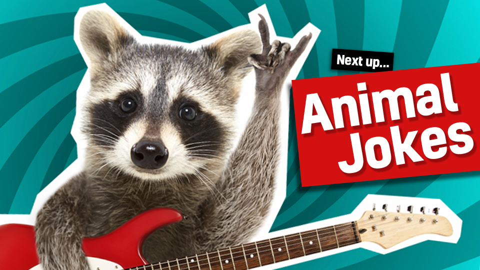 A raccoon playing a guitar - follow the link from fish jokes to our animal jokes