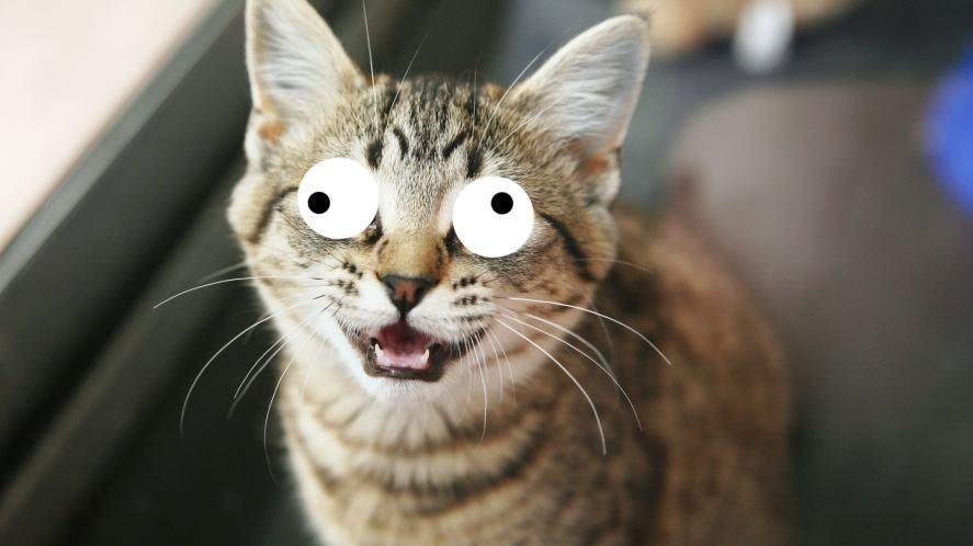 A big-eyed cat