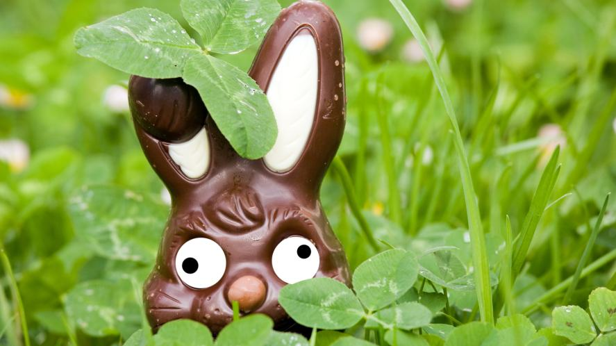 A chocolate rabbit hiding in the grass