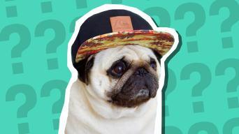 Puggy Smalls quiz