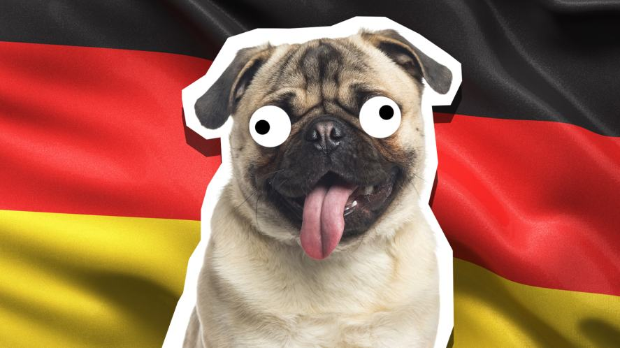 A pug standing in front of a German flag