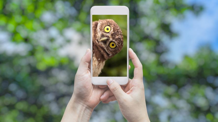 A phone used to take a photo of a curious owl