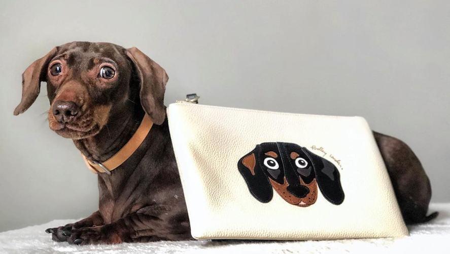 Pops modelling a dachshund purse