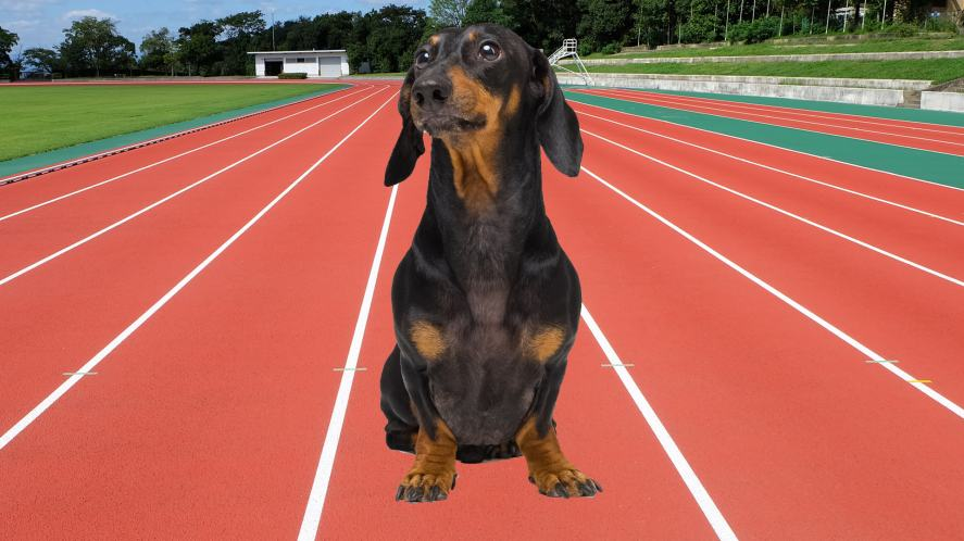 An Olympic-themed pooch