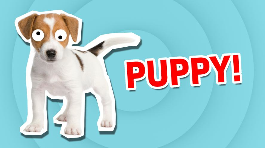 A puppy | What Cute Animal Are You?  | Which Cute Animal Are You?