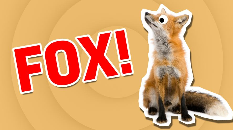 A handsome fox | What Cute Animal Are You?  | Which Cute Animal Are You?