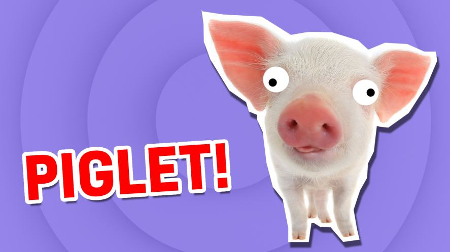 A piglet | What Cute Animal Are You?  | Which Cute Animal Are You?