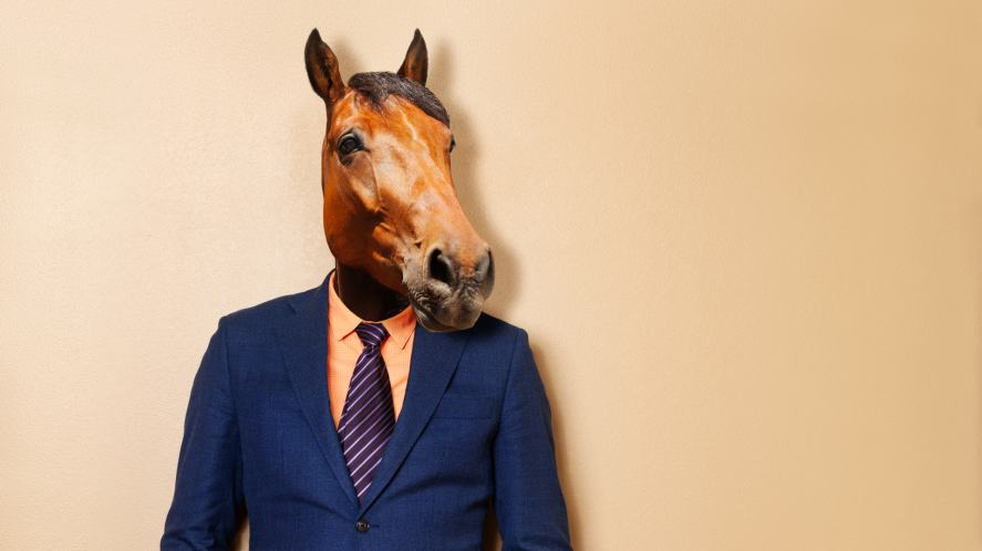 A well-dressed horse