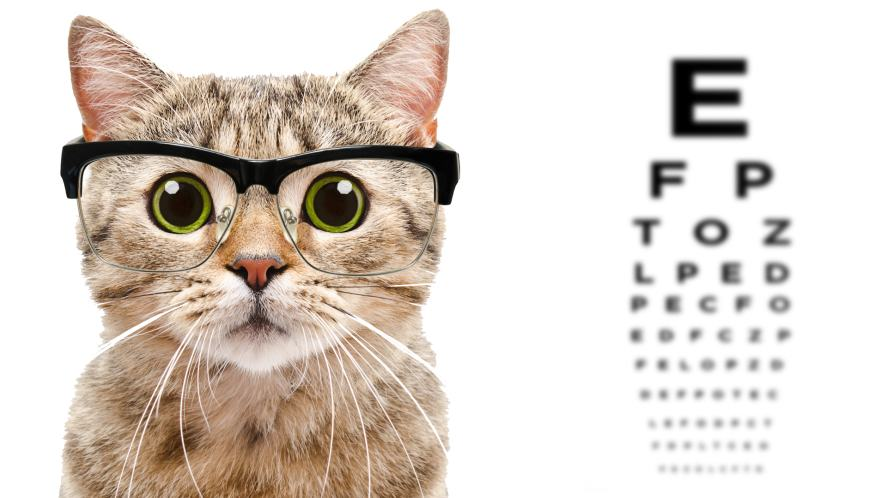 A cat wearing glasses at a feline opticians