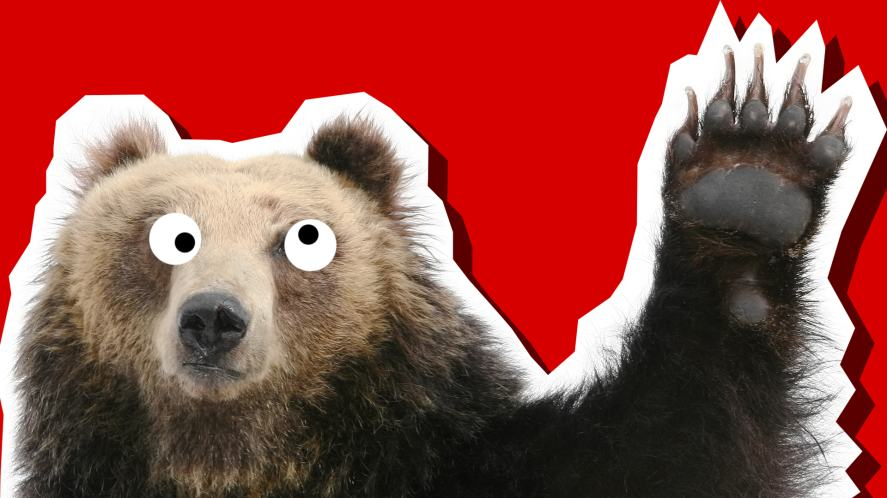 A waving bear