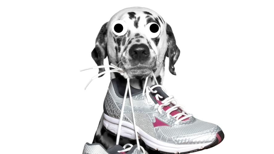 A dog with a pair of trainers in its mouth