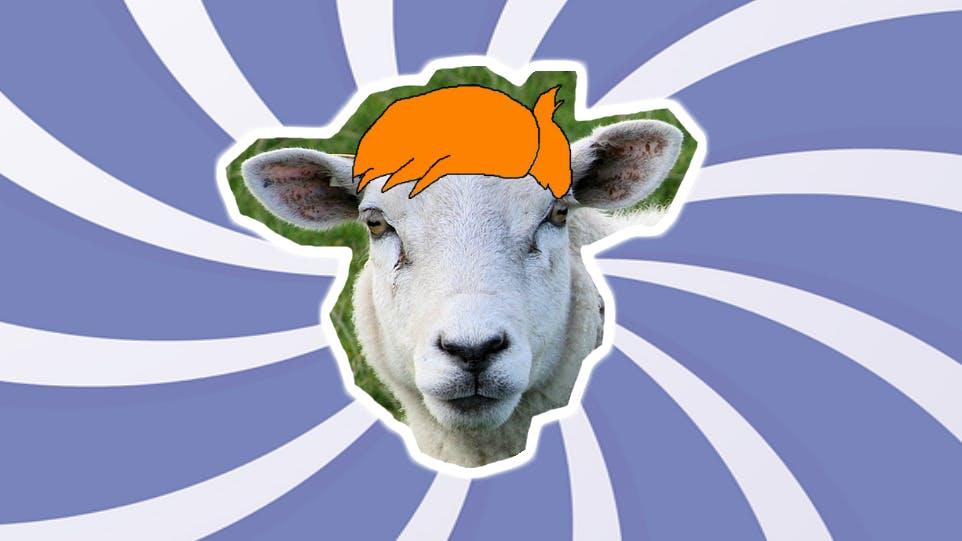 Where do sheep go to get their hair cut? A sheep with a funny hair style. | Where Do Sheep Get a Haircut