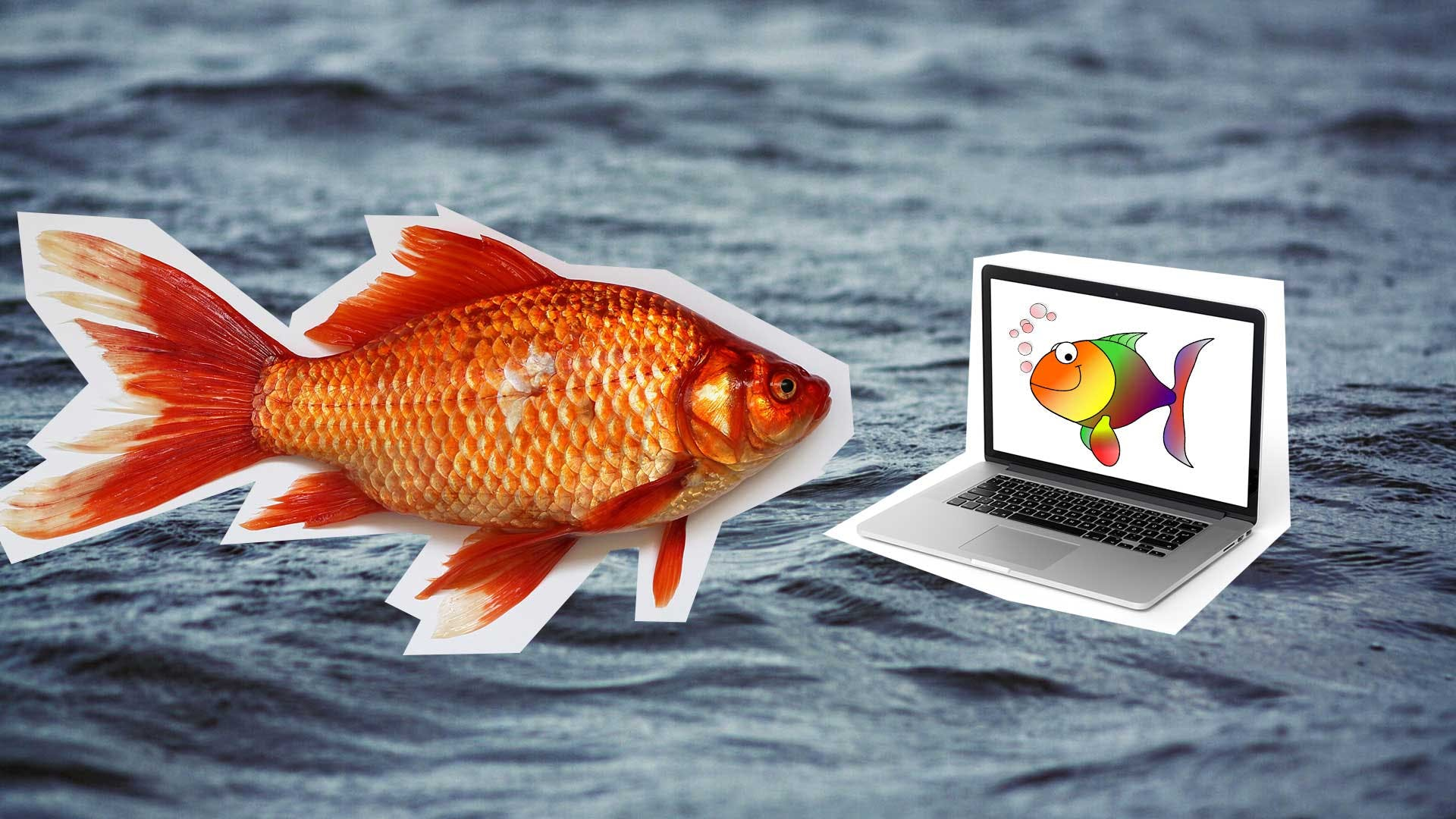A goldfish looking at a laptop with a picture of rainbow fish on it