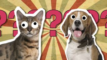 Cats and dogs quiz