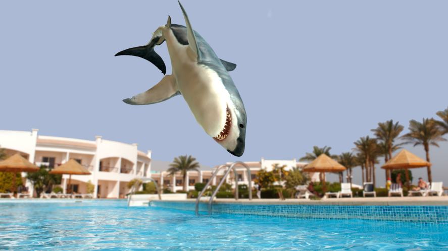 A shark has a lovely time in a quiet hotel swimming pool