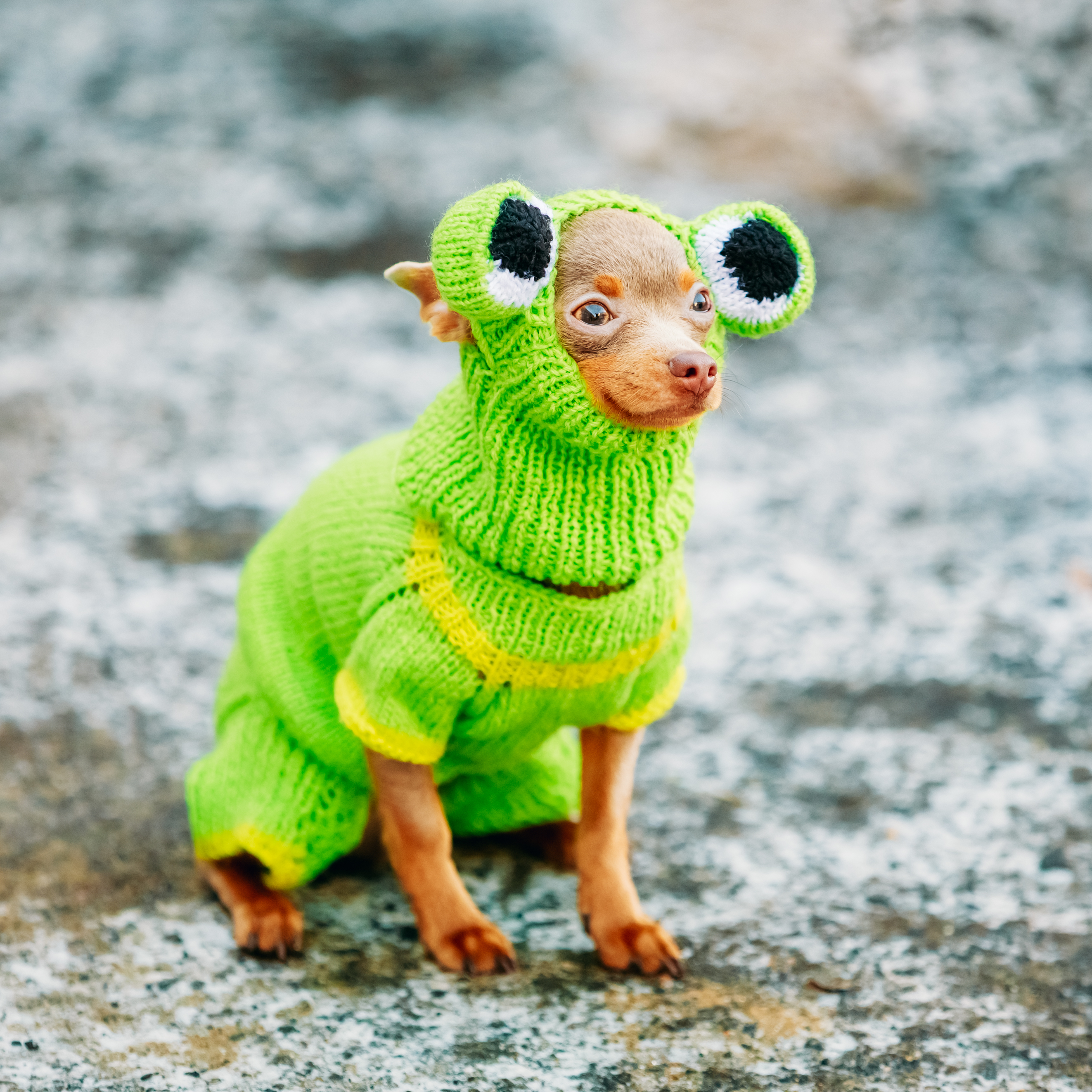 A small dog wearing a green coat